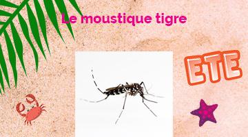 Le Moustique tigre - Conseils pour un été en toute sécurité en nouvelle-Aquitaine