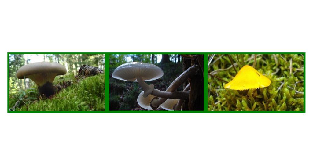 Formation aux risques mycologiques majeurs en officine